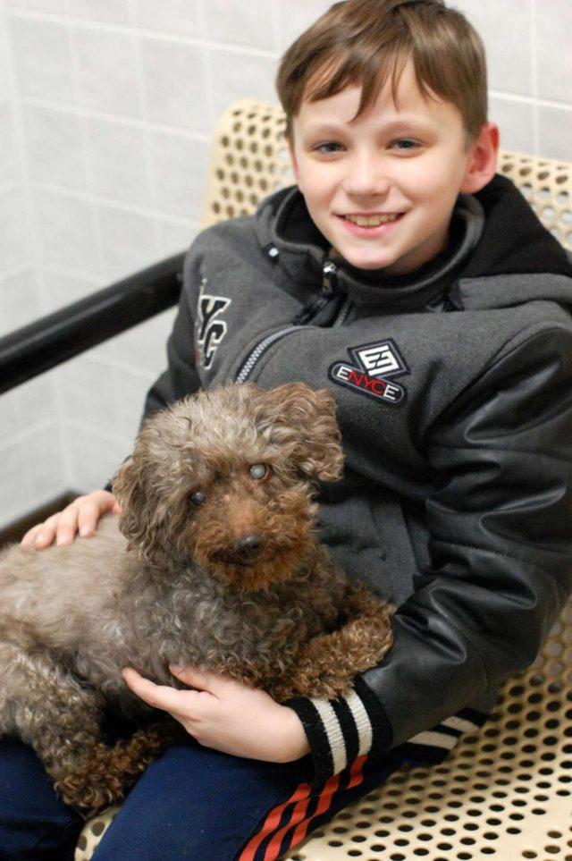 menino adota cachorro mais velho abrigo