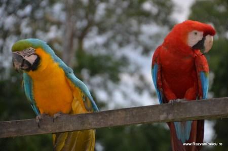 Peru, Amazon jungle 14