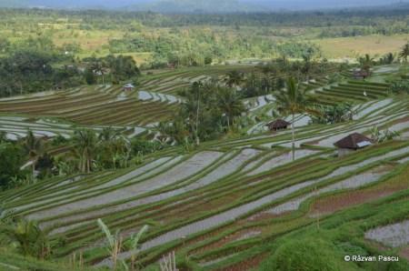 Insula Bali 24