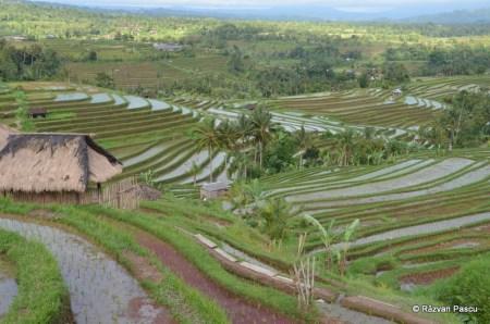 Insula Bali, Orezariile de la Jatiluwih