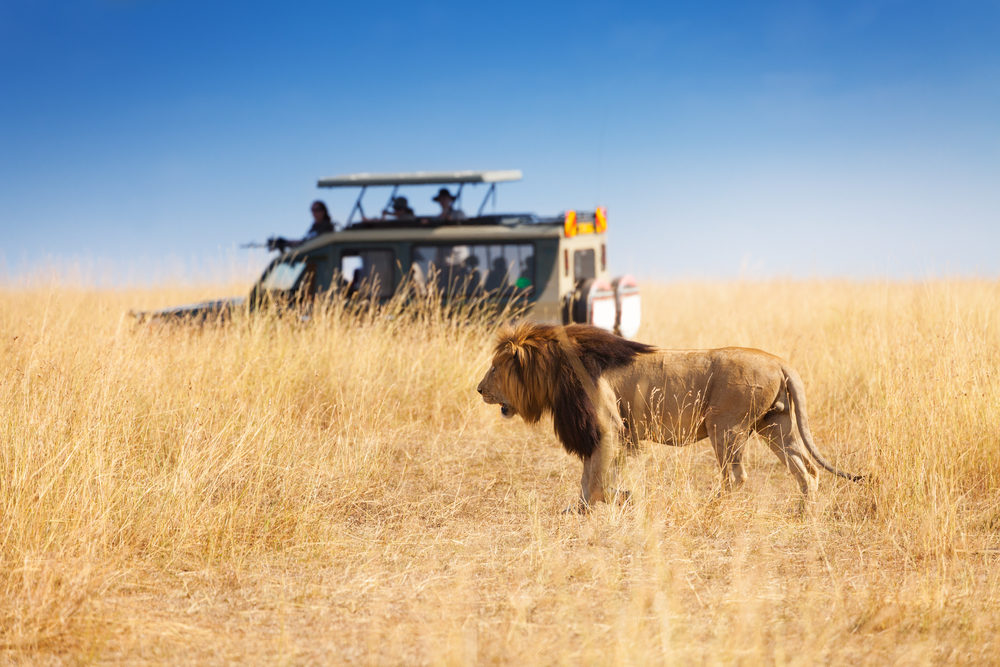 excursie safari tanzania