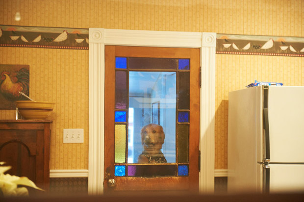 Dog looking through the window