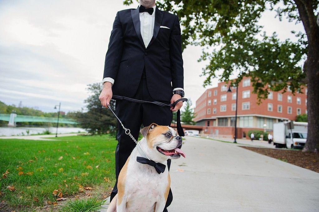 wedding-dog-iowa-city