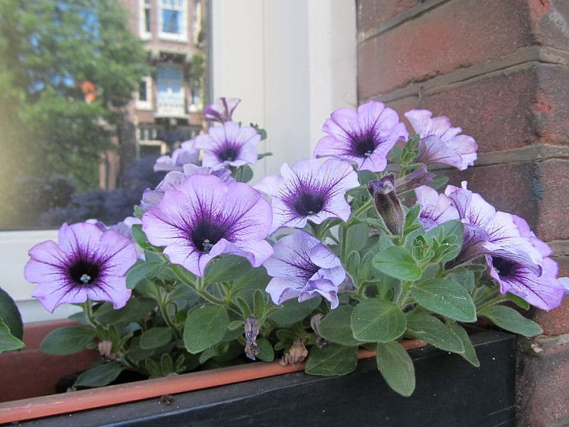 replacement window boxes