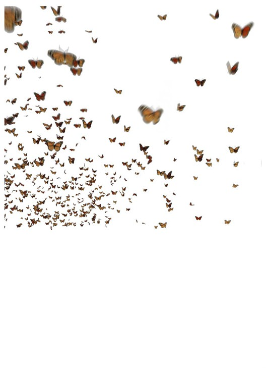 04-04-1_butterfly motion