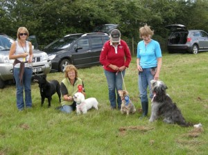 banbury-dog-walking-hinton-angel-first