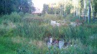 Парк в Академгородке 13