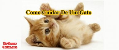 Como cuidar de um gato