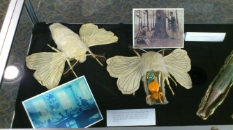 Close-up shot of the male and female silkworm moths, along with a few shots of the bug models in use c.1900.