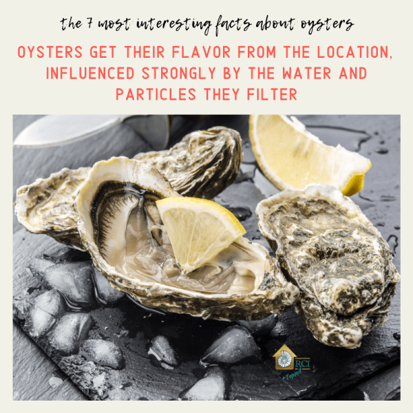 oysters get their flavor from the location - RCI Plus Topsail