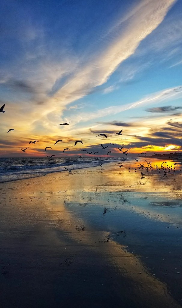 Sunrise Birds in North Topsail Beach taken by Amy Wiley - RCI Plus Topsail