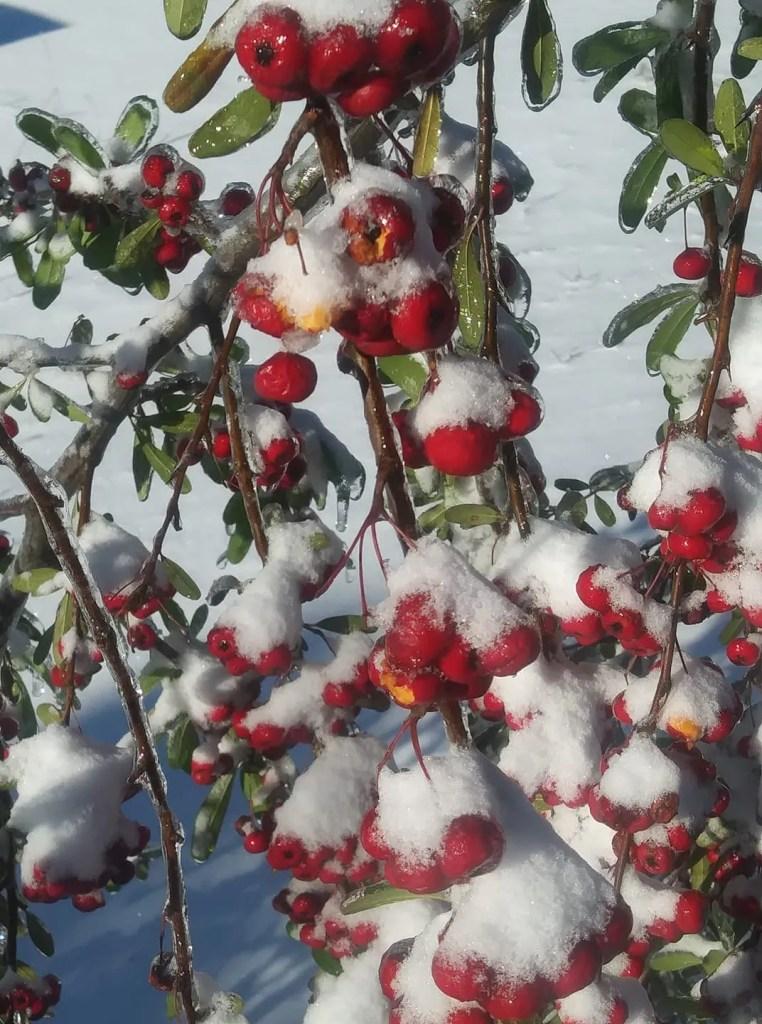 Winter Storm Grayson Jan 2018 Hampstead NC RCI Plus Topsail