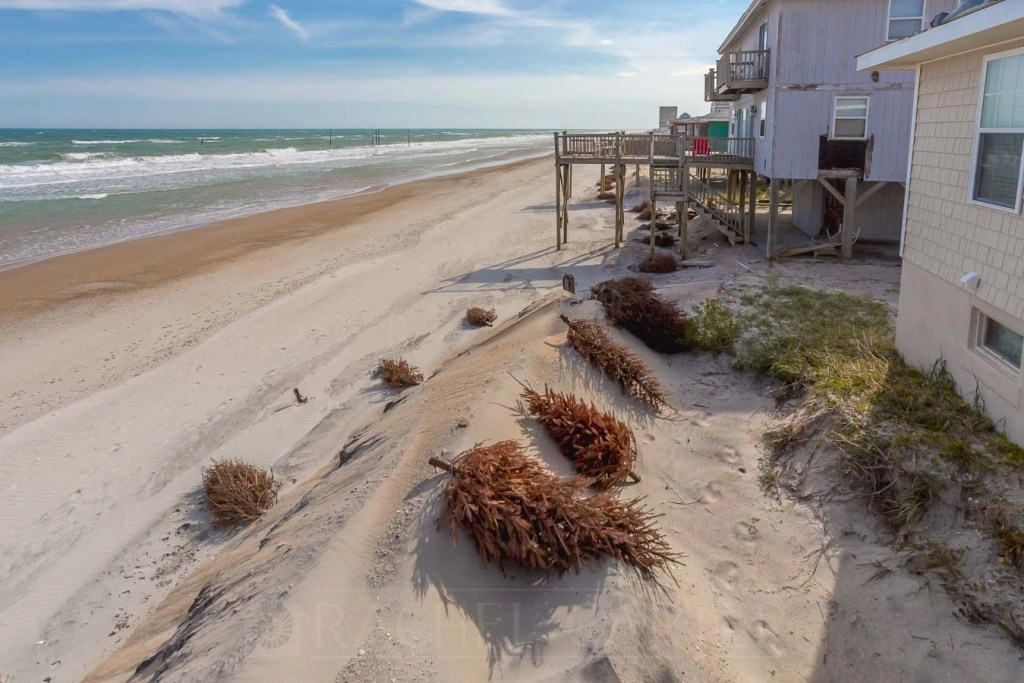 Christmas Trees to build dunes - North Topsail Beach - RCI Plus Topsail