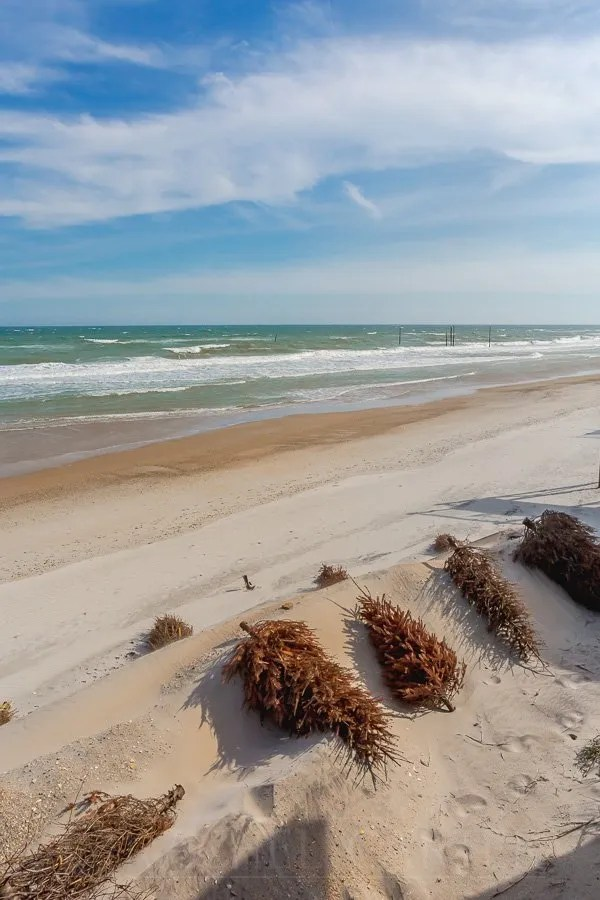 North Topsail Beach April 2019, rebuilding the dunes with Christmas Trees, Rachel Carter