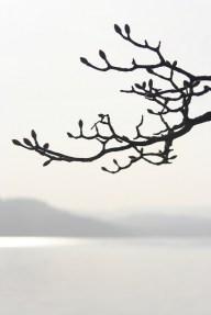 Tree In Winter - Robin Johnston