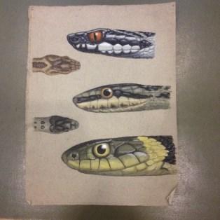 jean-beauchamp-drawings