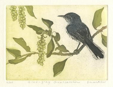 S. Martin Blue-Gray Gnatcatcher