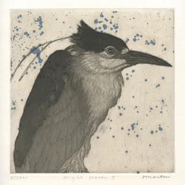 S. Martin Night Heron