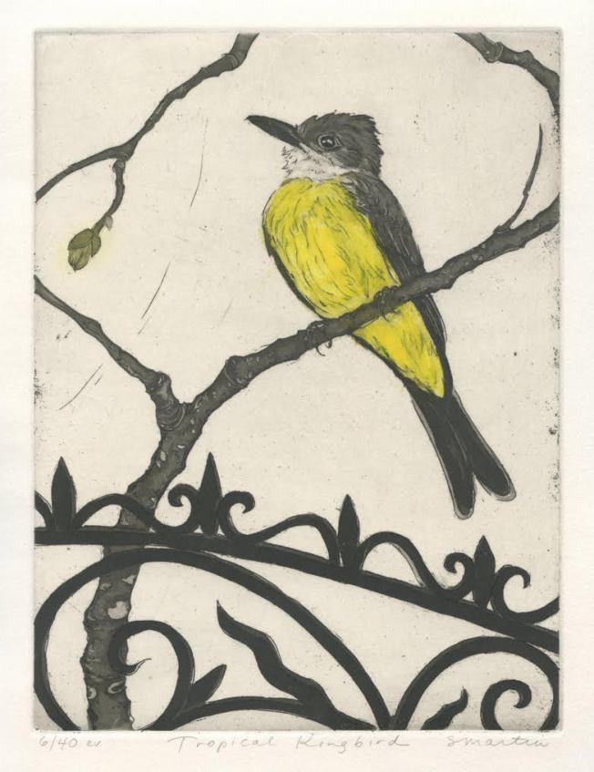 S.Martin Tropical Kingbird