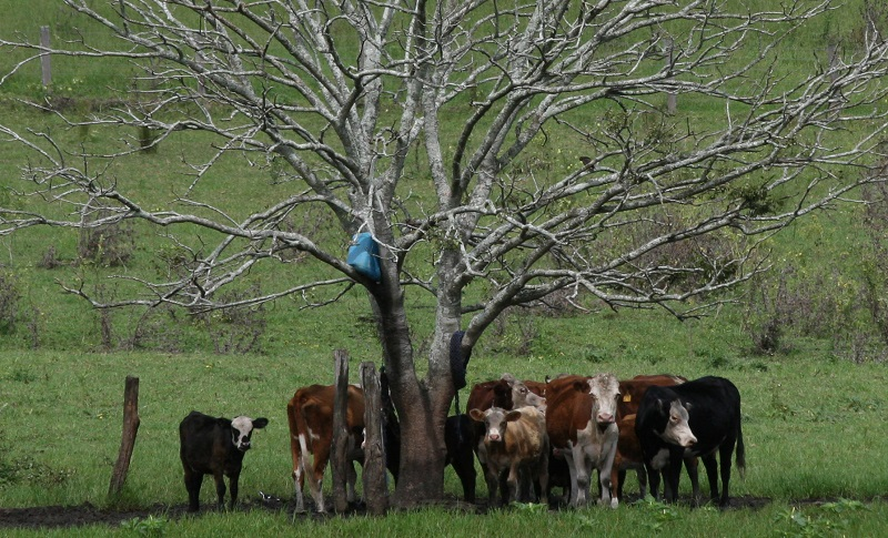 Biosecurity Planning Workshop to assist meat producers