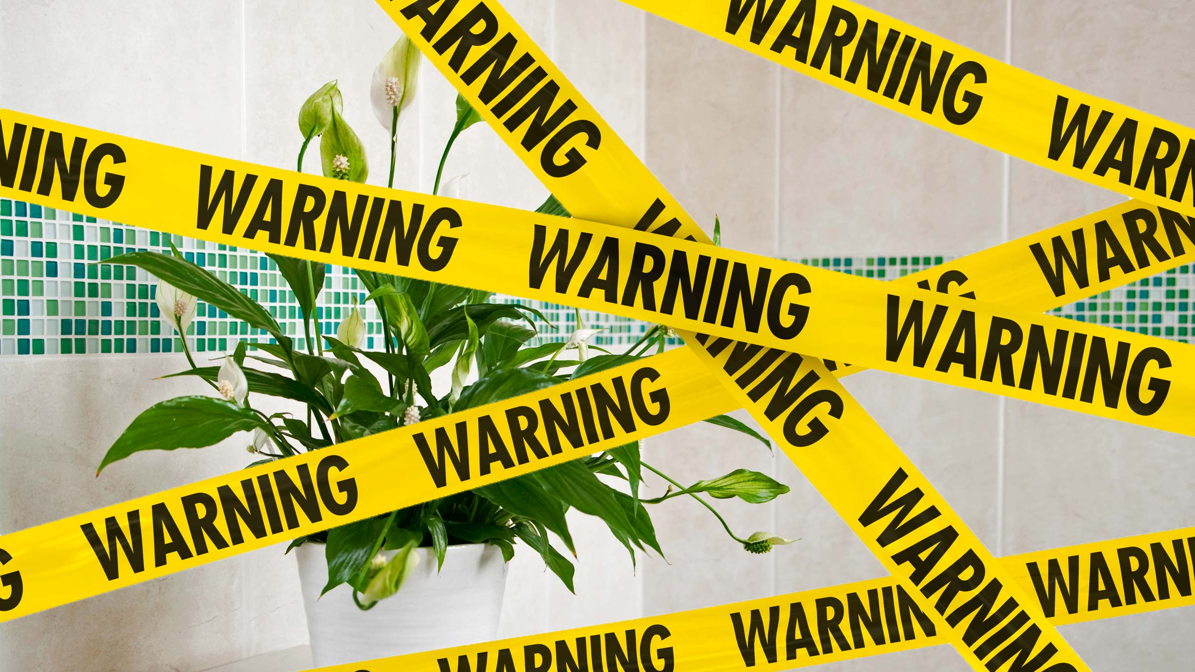 Houseplants That Could Kill You and Your Pets