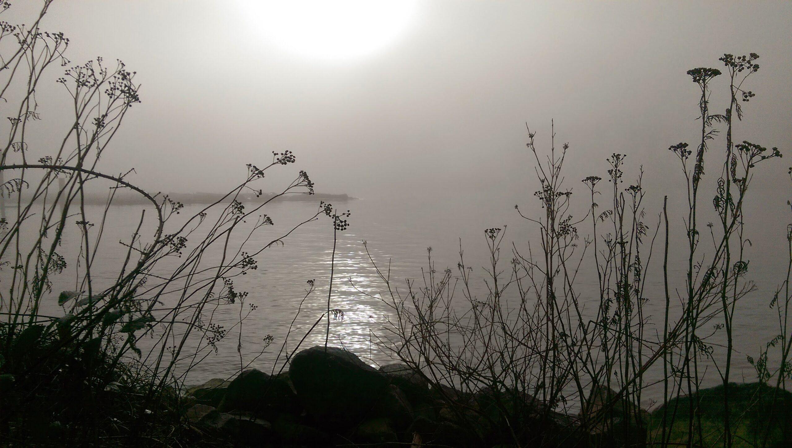 RD Fog