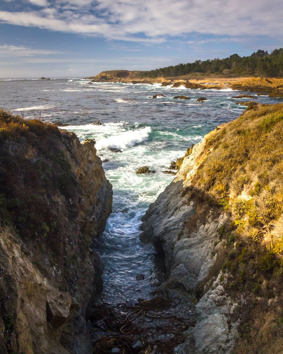Point Lobos-7681
