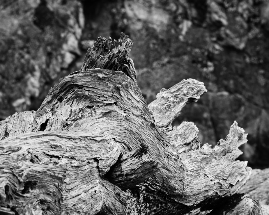 Point Lobos B&W-2038-2