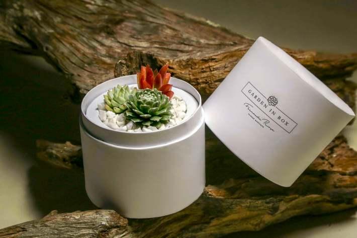 Garden-in-Box-por-Fernanda-Rosa-Flores-Boutique-foto-Fabio-Martins-4-300x200 13 dicas de presente e opções em gastronomia para o Dia dos Pais no RS