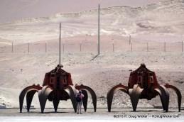 Desert Crabs