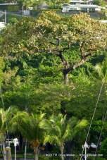 Pā'ōfa'i Gardens