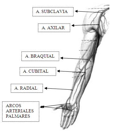 Sindrome de los Escalenos, o Sindrome de la 1ª Costilla - RDP.OSTEÓPATA