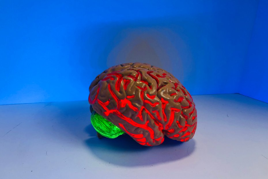 """The brain of addiction is unique to the """"normal"""" brain"""