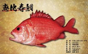 恵比寿鯛-魚拓