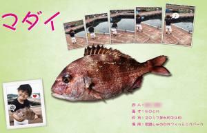 真鯛デジタル魚拓構成例