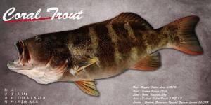 スジアラ魚拓