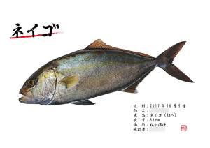 ネイゴ魚拓