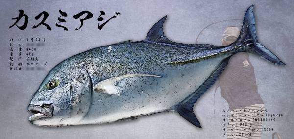 カスミアジ魚拓