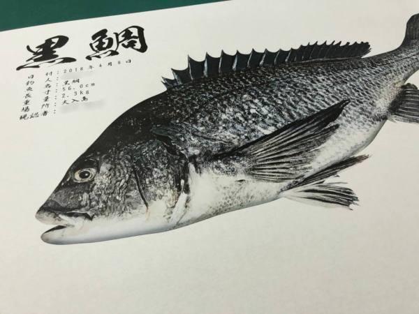 黒鯛-和紙