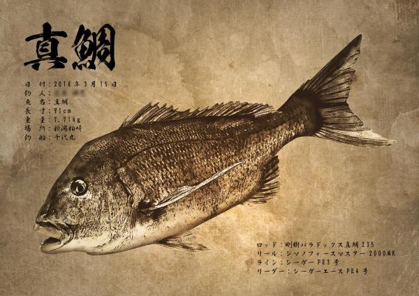 真鯛-魚拓