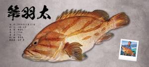 箒羽太デジタル魚拓