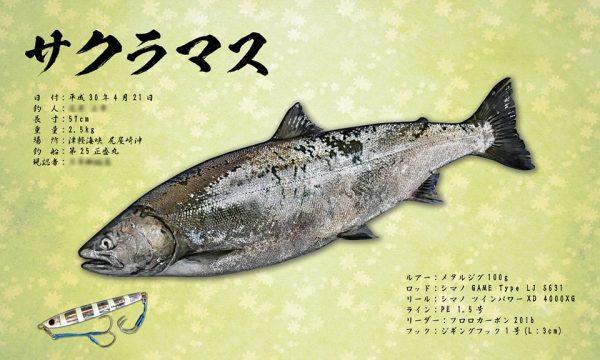 サクラマス魚拓