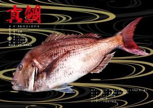 鯛デジタル魚拓