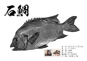 石鯛デジタル魚拓