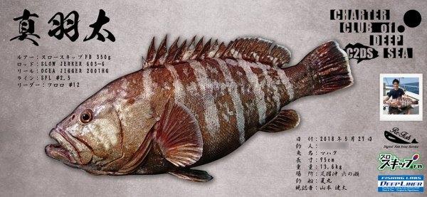 マハタデジタル魚拓
