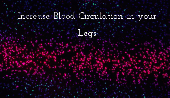 Blood Circulations in your Legs