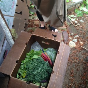 food waste and farm share