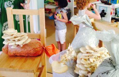 preschool mushrooms done