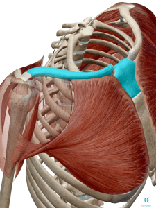 Image of shoulder pain, clavicle, collar bone, rotator cuff, labral tear, rotator cuff tear, frozen shoulder, impingement