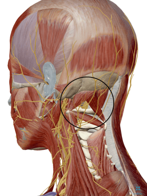 Suboccipital Nerves Muscles Neck Pain Tension Headache Tightness Strain